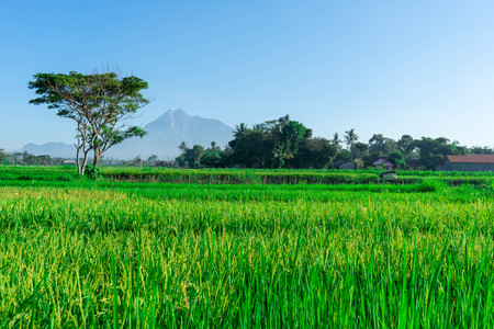 views of rice fields with mountain backgrounds in a rural area in Indonesia - Asia Culture
