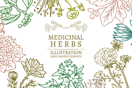 手描きのハーブの薬効があるハーブはビンテージ ベクトル図をスケッチします。