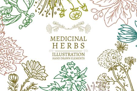 Dibujados a mano hierbas hierbas medicinales dibujo Ilustración del vector de la vendimia Foto de archivo - 53901685