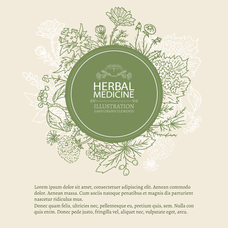 Herbal medicine hand drawn elements vintage tempate sketch vector illustration