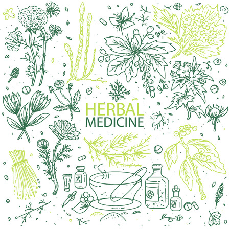 Alternative medicine herbs doodle hand drawn elements sketch vector illustration