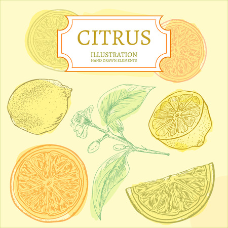 Citrus lemons and oranges hand drawn elements vintage sketch vector illustration