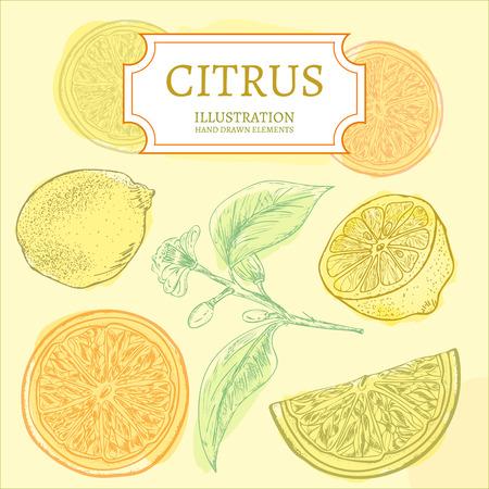 Citrus lemons and oranges hand drawn elements vintage sketch vector illustration