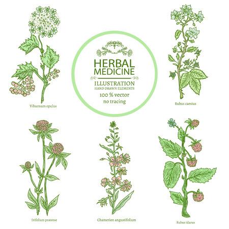 Hierbas medicinales acuarela collectionn de la mano medicinal plantas dibuja ilustración vectorial de época boceto