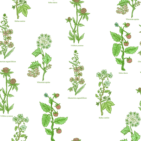 medical drawing: Medical herbs and plants seamless pattern hand drawn vintage sketch vector illustration