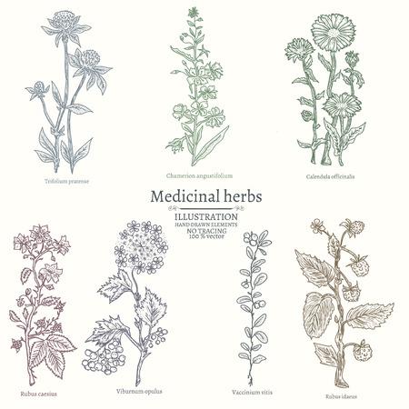Medische kruiden verzamelen van geneeskrachtige planten met de hand getekend vintage schets vector illustratie