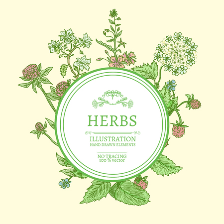 calendula flower: Flowers and herbs hand drawn vintage sketch vector illustration