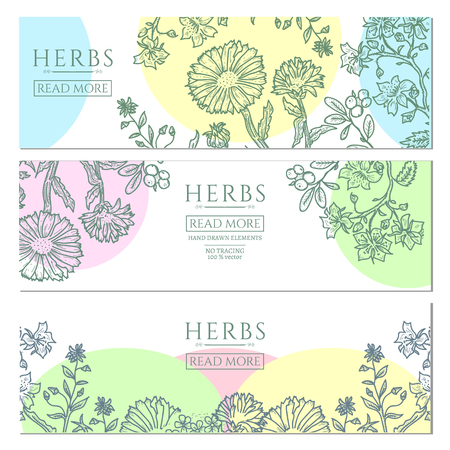 calendula flower: Medical herbs vintage template hand drawn sketch vector illustration