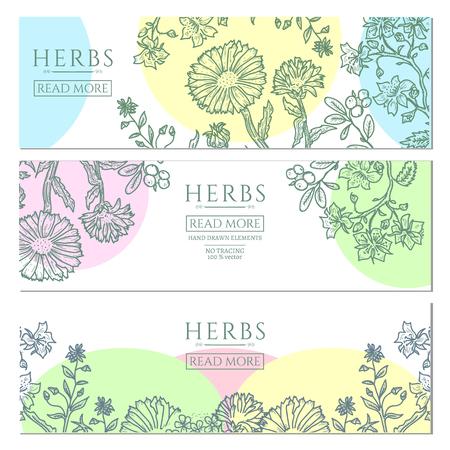 Medical herbs vintage template hand drawn sketch vector illustration
