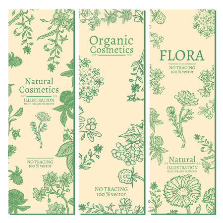 calendula: Elegant banners herbs and flowers hand drawn vintage sketch vector illustration