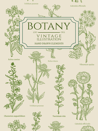 Botany book cover template vintage hand drawn elements vector illustration Vettoriali