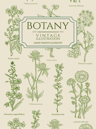 Botany book cover template vintage hand drawn elements vector illustration Illustration