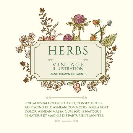 homeopathic: Vintage frame flowers and medicinal herbs natural and organic health care products Illustration