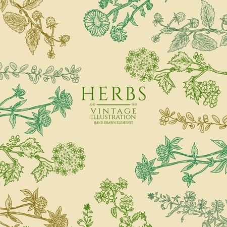 medicate: Medical herbs vintage template hand drawn sketch vector