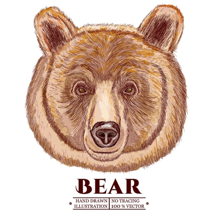 Portrait of a bear, head of a brown bear vector illustration