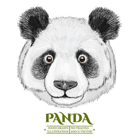 Panda portrait, cute panda head, hand drawn isolated on white vector