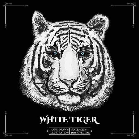 retrato del tigre blanco. ilustración vectorial dibujado a mano Ilustración de vector