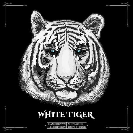 tigre blanc: White tiger portrait. Hand-drawn illustration vectorielle