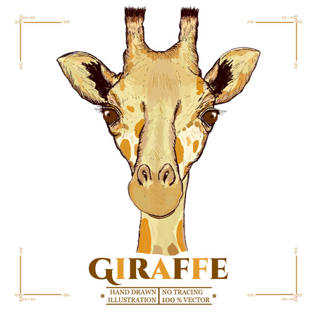 Giraffe realistic portrait, hand drawn animals vector