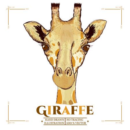 Giraffe realistic portrait, hand drawn animals vector
