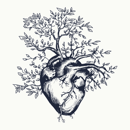 Anatomical human heart from which the tree grows vector illustration Çizim