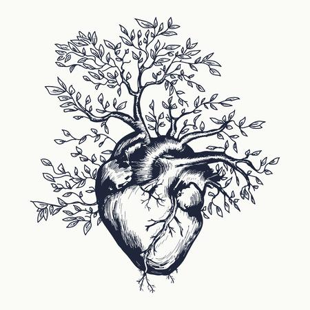 Anatomiczny ludzkie serce, z którego wyrasta drzewo ilustracji wektorowych