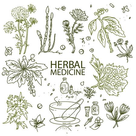 herbal medicine: Herbal medicine doodle hand drawn elements sketch vector illustration