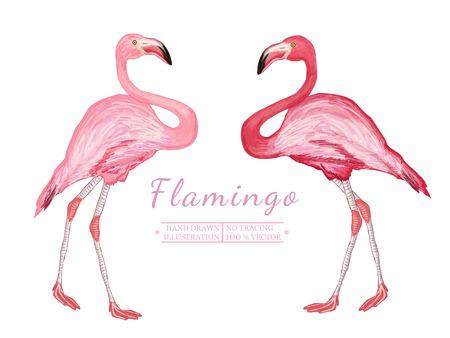 wader: Two flamingo isolated on white background beautiful pink flamingo vector
