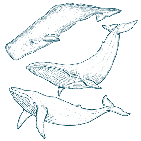 クジラは、ザトウクジラ シロナガスクジラ マッコウクジラの手描きの背景を設定します。