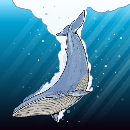 ballena azul: ballena azul bajo el agua vector de dibujos animados