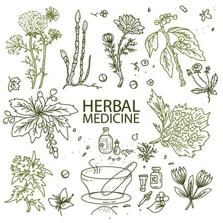 Herbal medicine doodle hand drawn elements sketch vector illustration