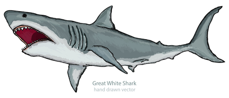 man eater: Great white shark isolated on white shark attack hand drawn vector
