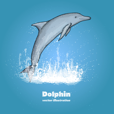 bottle nose: Beautiful dolphin jumping splash of water vector