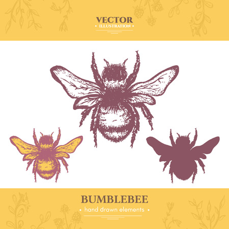 entomology: Bumblebee collection vintage style ink hand drawn vector