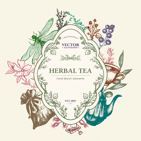 herbal tea: Herbal tea vector card design hand drawn vector illustration