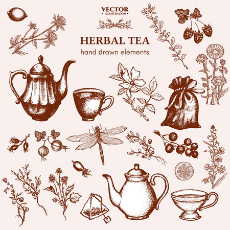 herbal tea: Herbal tea collection hand drawn ink vector