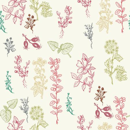 calendula: Herbs seamless patterns hand drawn ink vector Botanical design with herbal tea ingredients