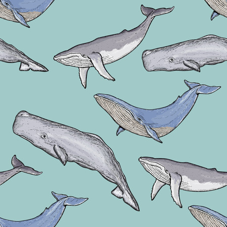 sperm whale: Whales seamless pattern vector