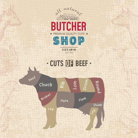 Cuts of beef. Butcher shop retro poster scheme and diagram - Cow. Vintage hand drawn vector Illustration