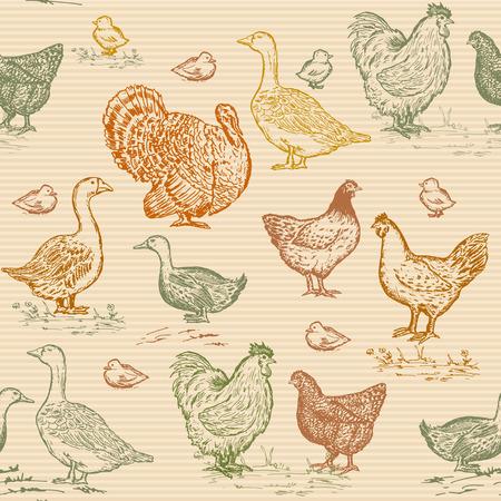 turkeys: Farm birds seamless pattern vintage engraving style. Chickens, geese, ducks, turkeys, packaging farm products hand drawn vector