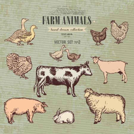 Landbouwhuisdieren vintage collectie, koe, varken, geit, schapen, kip, eend, gans, Turkije konijn hand getrokken boerderij dieren vector