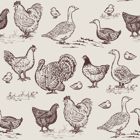 Farm birds seamless pattern. Chickens, geese, ducks, turkey, packaging farm products hand drawn vector
