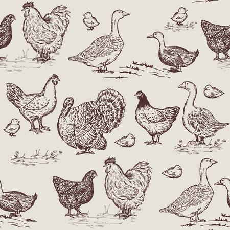 Farm birds seamless pattern. Chickens, geese, ducks, turkey, packaging farm products hand drawn vector