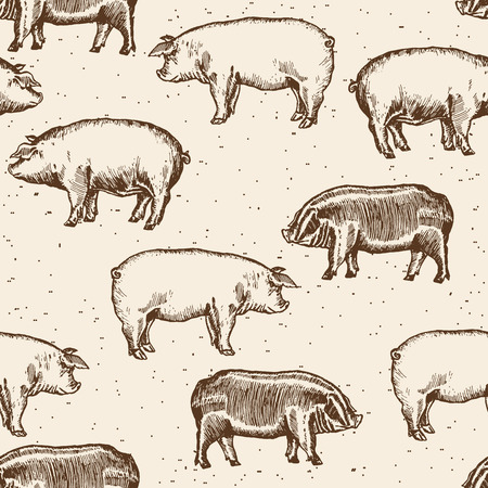 pigsty: Pigs seamless pattern farm pigs hand drawn vintage vector Illustration