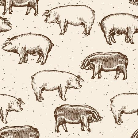 pigsty: Pigs seamless pattern farm pigs hand drawn vintage vector Illustration