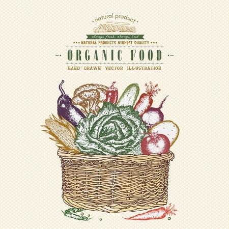 food basket: Fresh vegetables in basket, vintage organic food vector illustration