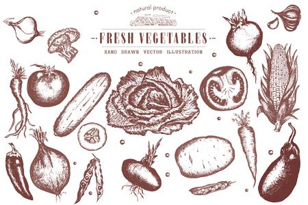 Gemüse Vintage-Kollektion Tinte Hand gezeichnet Vektor