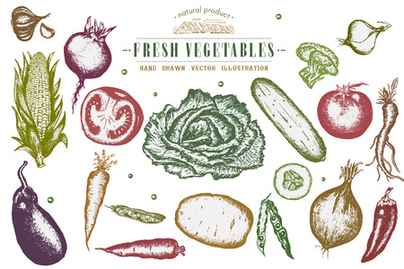 turnip: Hand drawn vegetables set, collection eco food  ink hand drawn vector Illustration