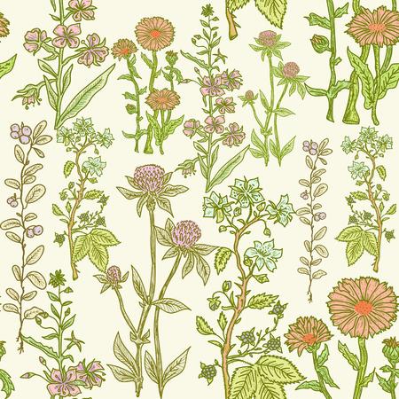 bitter: Seamless vintage herbal pattern, medicinal herbs and plants sketch. Herbal medicine vector background