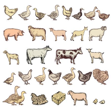 Farm animals big collection vector. Hand drawn Farm animals set Illustration